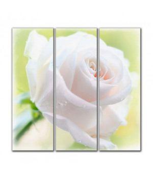 Біла троянда, 90х90 см