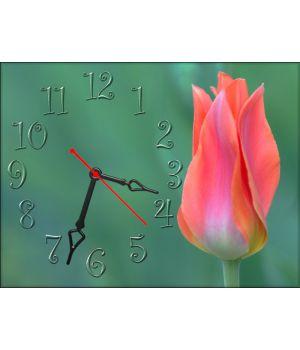 Настінний годинник Тюльпан 69041, 30х40 см