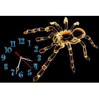 30х45 см, Павук
