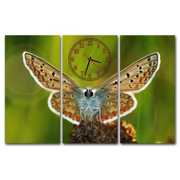Модульний настінний годинник Краса Метелика