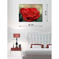 Картина на холсте 30х40 Красная роза