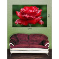 Картина на полотні 38х58 Троянда в росі