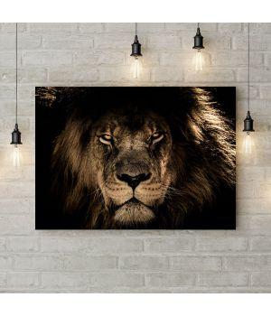 Картина на холсте Лев - царь зверей, 50х35 см