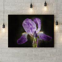 Картина на холсте Фиолетовый ирис, 50х35 см