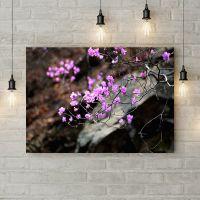 Картина на холсте Веточка чс розовыми цветками, 50х35 см