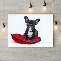 Картина на холсте Собака на подушка, 50х35 см