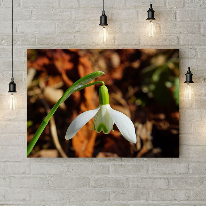Картина на холсте Весенний подснежник, 50х35 см
