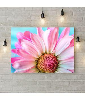 Картина на холсте Нежный бело-розовый цветок, 50х35 см