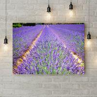 Картина на холсте Лавандовое поле, 50х35 см