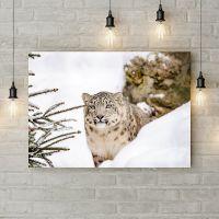 Картина на холсте Снежный леопард, 50х35 см