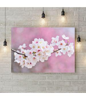 Картина на холсте Ветка белой сакуры, 50х35 см