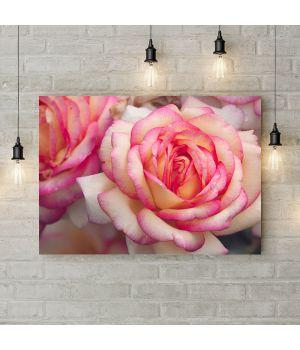 Картина на полотні Біло рожева троянда, 50х35 см