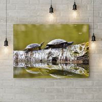 Картина на холсте Черепахи на дереве, 50х35 см