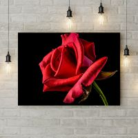 Картина на холсте Распутившаяся роза, 50х35 см