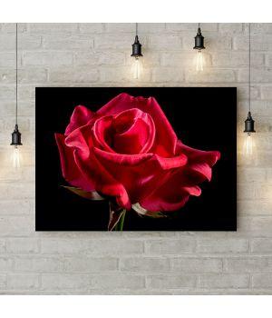 Картина на холсте Распутившаяся роза side, 50х35 см
