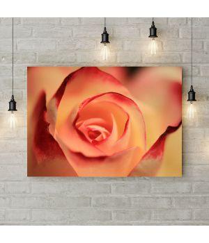 Картина на полотні Бутон троянди, 50х35 см