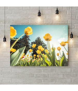 Картина на холсте Желтые тюльпаны, 50х35 см