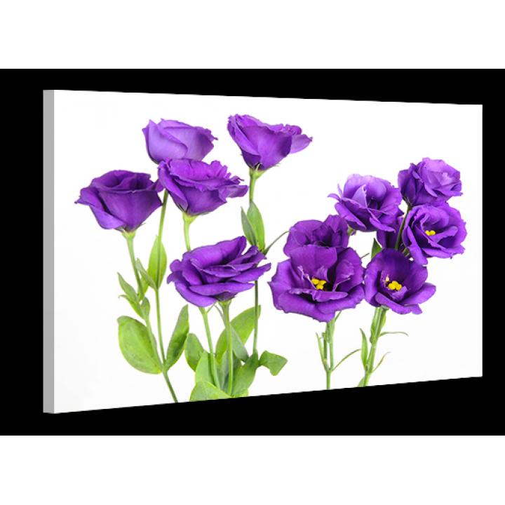 Картина на холсте XP145, 50х70 см