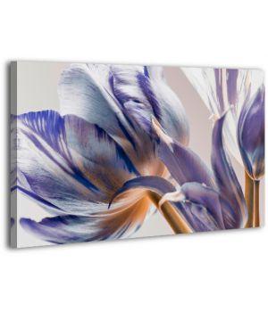Картина на холсте XP424, 50х70 см