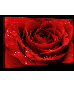 Картина на холсте XP150, 50х70 см