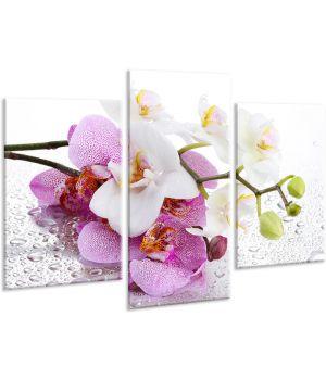 Красивая комнатная модульная картина на холсте Orchid AMD 015, 96х70 см
