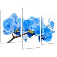 Красива кімнатна модульна картина на полотні Orchid AMD 107, 96х70 см