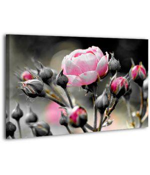 Картина на холсте XP501, 50х70 см