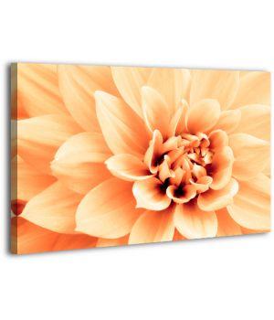 Картина на холсте XP418, 50х70 см