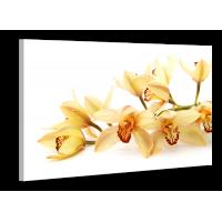 Картина на холсте XP130, 50х70 см