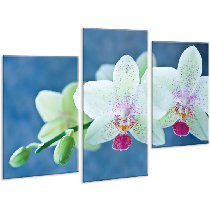 Красивая комнатная модульная картина на холсте Orchid AMD 098, 96х70 см