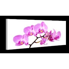 Оригинальная дизайнерская картина XP036, 50х100 см