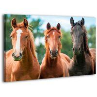 Картина на холсте XP391, 50х70 см