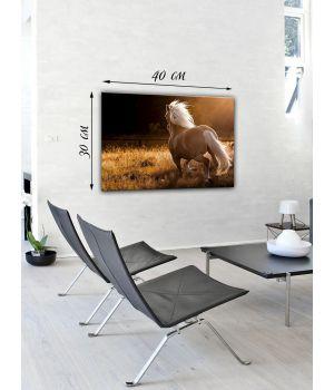 Картина на холсте 30х40 Бегущая лошадь