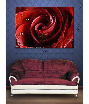 Фотографическая картина Роса на розе
