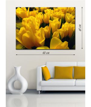 Фотографическая картина Желтые тюльпаны