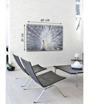 Картина на холсте 30х40 Белый павлин