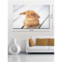 Картина на холсте 38х58 Рыжий кролик