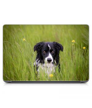 Наклейка на ноутбук - Wet Dog