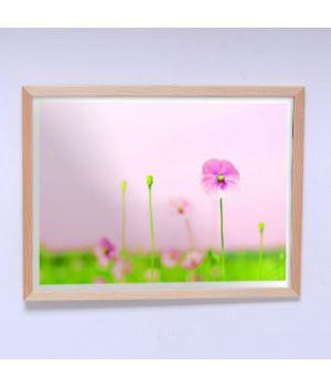 Постер для дома Полевые цветы
