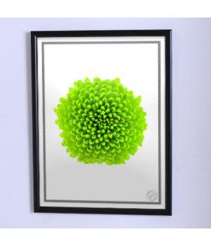 Постер для дома Крупный зелёный цветок