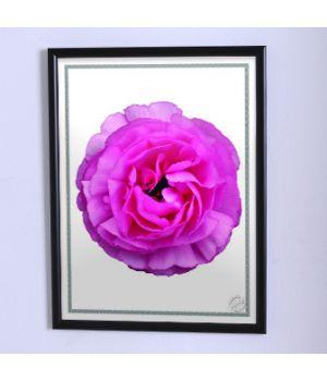 Постер для дома Крупный розовый цветок