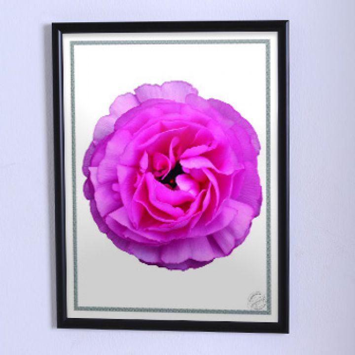 Постер для будинку Велика рожева квітка