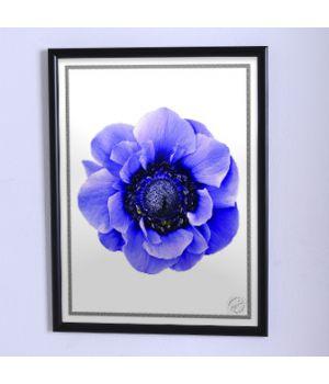 Постер для дома Крупный синий цветок